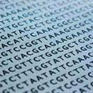 DNA Race Cluster